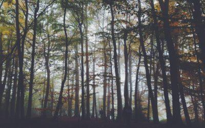 Wycinasz drzewo na działce? Zapoznaj się z  nowymi przepisami